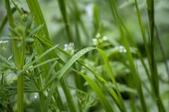 Tender green leaves of grass stock images