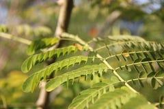 Tender green leaves Stock Photo