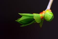 Tender green shoots. Stock Image