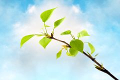 Tender green spring branch Stock Photos
