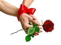 Tender hands of lovers with rose Stock Images