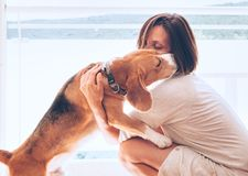 Tender home scene with woman owner and her beagle dog royalty free stock image