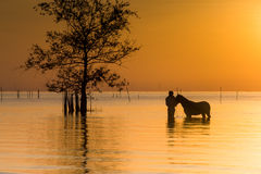 A Tender Horse Moment. A man has a moment with his horse as the sun rose on the lake on the shores of Pak Pra, Patthalung, Thailand stock photo