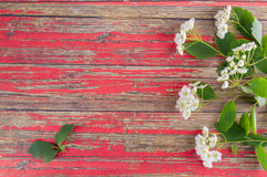 Tender inflorescences of fruit trees Royalty Free Stock Photo