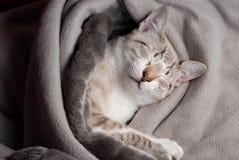 Tender kitten Stock Photo