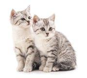 Tender kittens. Tender kittens on a white background royalty free stock image