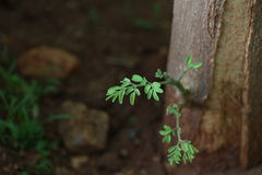Tender leaves Stock Image