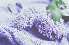 Tender lilac flowers over knitted sweater Royalty Free Stock Photos