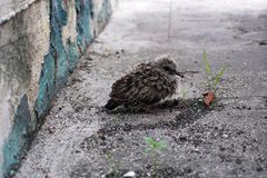 Tender little bird near the wall is scared Stock Photography