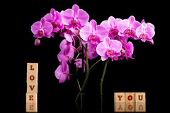 Tender Love You background Royalty Free Stock Photography