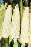 Tender maize cob Stock Photo