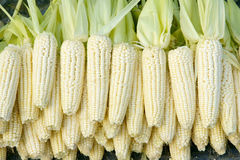 Tender maize cob. Many tender maize cobs are sold Royalty Free Stock Images