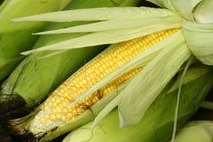 Tender maize cob. The close-up of tender maize cob Royalty Free Stock Photos