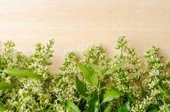Tender medical neem leaves and flower Stock Photography