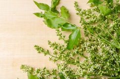 Tender medical neem leaves and flower Royalty Free Stock Photos