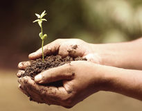Tender medicinal neem plant Royalty Free Stock Image
