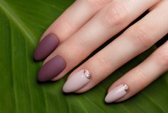 Tender neat manicure on female hands on green leaves background. Nail design. Tender neat manicure on female hands on a background of green leaves. Nail design royalty free stock image