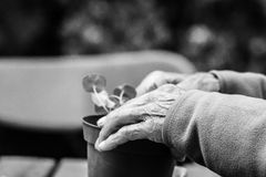 Tender old hands with life experience plant a tree. Royalty Free Stock Images