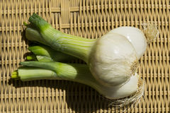 Tender onions. Stock Images