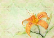 Tender orange lily flower. Holiday card template. Beautiful lily flower on a abstract grunge patterned background, holiday card template. Postcard with tender stock illustration