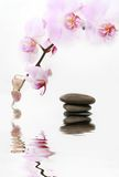 Tender orchid. Orchid close up with a stones piramyd Royalty Free Stock Photos