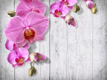 Tender orchid flowers and buds on old white painted boards vinta Royalty Free Stock Images