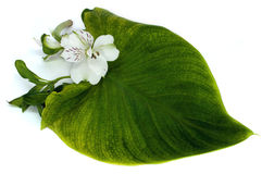 Tender orchid with green leaf Stock Photos