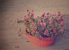 Tender pansies Royalty Free Stock Photo