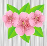 Tender pink flowers on a background wooden texture Stock Photos