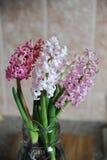 Tender pink flowers of hyacinth bulbs in a glass jar. Nice pink background, spring mood. Tender pink flowers of hyacinth bulbs in a glass jar vase. Nice pink royalty free stock images