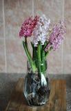 Tender pink flowers of hyacinth bulbs in a glass jar. Nice pink background, spring mood. Tender pink flowers of hyacinth bulbs in a glass jar vase. Nice pink royalty free stock image