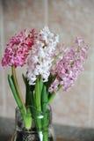 Tender pink flowers of hyacinth bulbs in a glass jar. Nice pink background, spring mood. Tender pink flowers of hyacinth bulbs in a glass jar vase. Nice pink royalty free stock photo