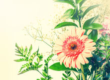 Tender pink gerbera among green leaves Royalty Free Stock Photo