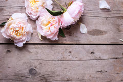 Tender pink peonies flowers on aged wooden background. Place for text.  Selective focus Royalty Free Stock Photography