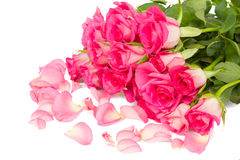 Tender pink  roses bouquet with petals Royalty Free Stock Photos