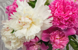 Tender pink and white peony flowers Stock Photo