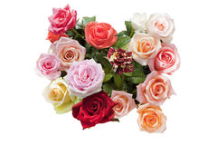 Tender roses Stock Photography