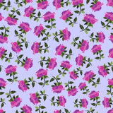 Tender roses seamless pattern Royalty Free Stock Images