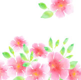 tender rosy plumeria flower hand painted element. Royalty Free Stock Images
