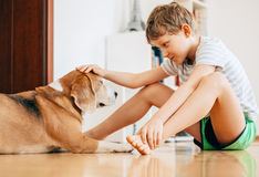 Tender scene between boy and dog Royalty Free Stock Photos