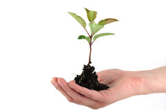 Tender seedling Stock Photography