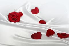 Tender silk with red rose. Tender white silk with red rose and petals Royalty Free Stock Photo