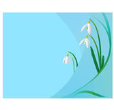 Tender snowdrops background Stock Images