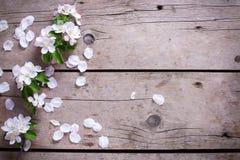 Tender spring apple tree flowers on aged vintage wooden backgrou Royalty Free Stock Image