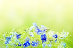 Tender spring floral background with blue Veronica Germander, Speedwell flowers. A bouquet of wild meadow or forest flowers. Selec. Tive soft focus, copy space stock image