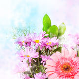 Spring pink flowers Stock Images