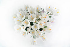 Tender spring white flowers Royalty Free Stock Photography