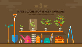 TENDER TOMATOES 1 Royalty Free Stock Photo