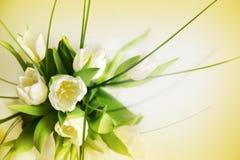 Tender tulips background Stock Photos