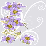 Tender twig blossoming orchids Royalty Free Stock Photo
